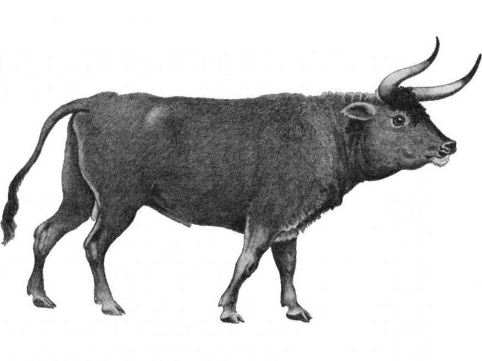 egy bika lánc életciklusa