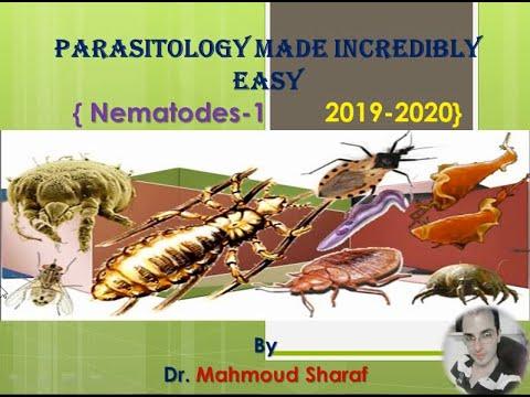 a szarvasmarha szalagféreg kórokozók morfofiziológiai tulajdonságai népi gyógyszerek gombák és paraziták ellen