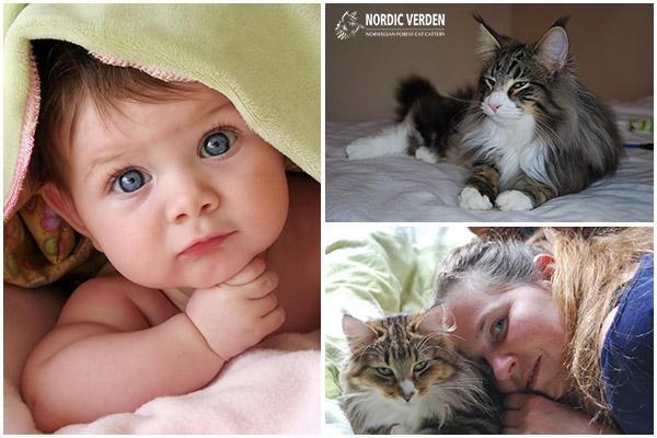 egy macska injekciója férgektől