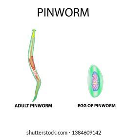 pinworm tippek