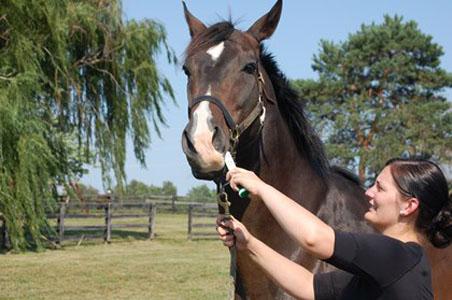 A lovak és a galandféreg - 1. rész - Lóápolás és egészség