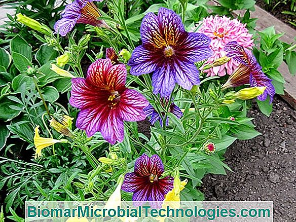 Tudja, hogy melyik a földkerekség legnagyobb és legbüdösebb virága?