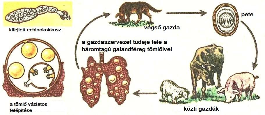 nenyp.hu - A leggyakoribb fertőződési lehetőségek