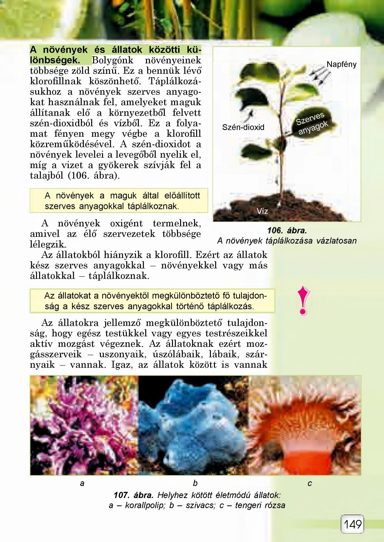 Szarvasmarha szalagféreg ürege Hogyan lehet felepulni a parazitákbol
