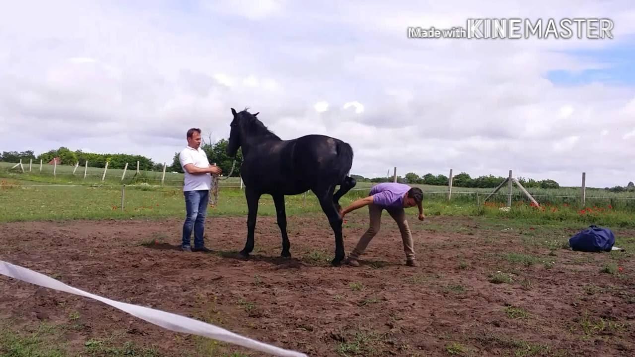 ló kerekes féreg