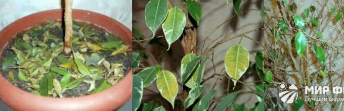van e kaszaféreg a csukaban gyógyszerek vény nélkül paraziták számára