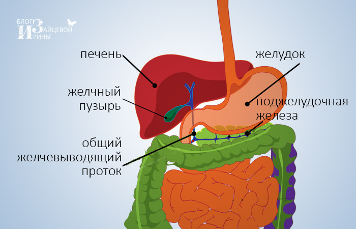 kerekféreg bélrendszeri tünetek kezelése myxozoan paraziták