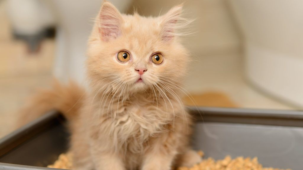 A macskák és a paraziták - Betegség, gyógyítás