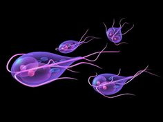 bacteria giardia que es