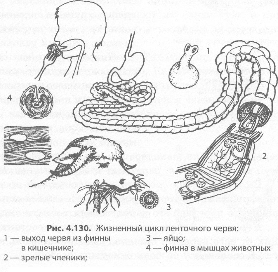 hol lehet vásárolni a mérgező parazita gyógyszert gyógyszer férgek ellen férgekben