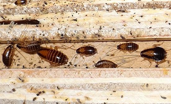 helminták ízeltlábúak és protozoák