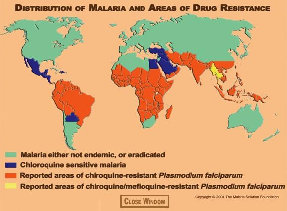 a malária plazmodium fejlődésének stádiumai