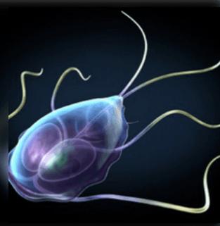 az emberi parazita fertőző tünetei