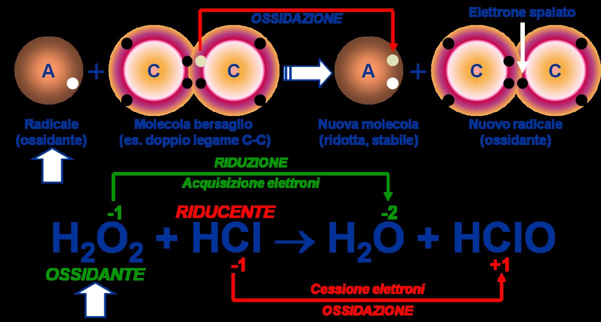 cernagilis a kosárban légzési papillomatosis hpv