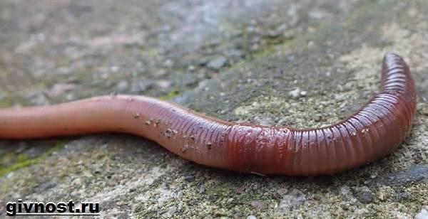 a paraziták veszélye az emberi testben