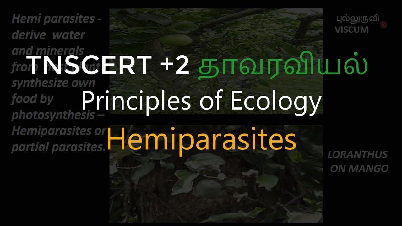 hogyan lehet megszabadulni a kis parazitáktól az epehólyag eltávolítása után rossz lehelet