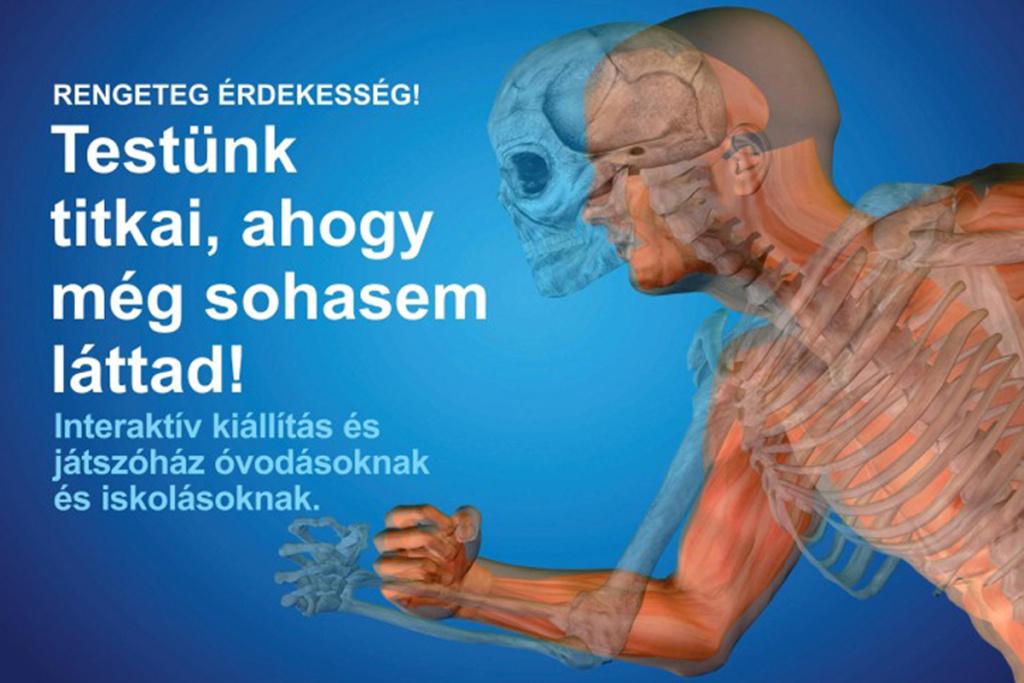 ahol a testben mi a féreggyógyszer neve az emberek számára
