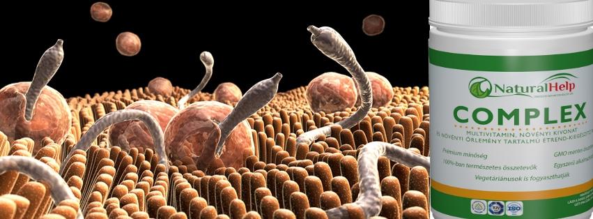 bélféreg kezelése természetesen Ascaris szimmetria típusa