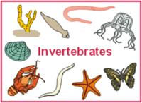segítség a medencében az ovipositor enterobiasisban