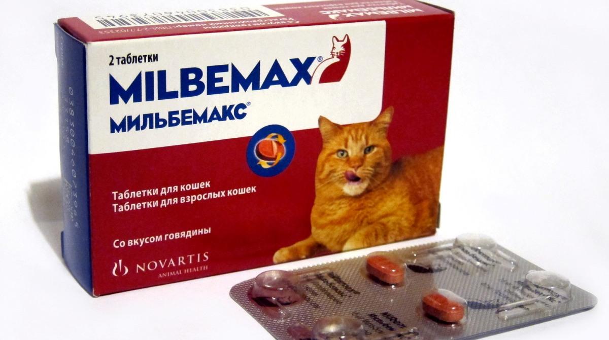 Anthelmintikus parazitol macskák számára. Anthelmintikus készítmények macskáknak.