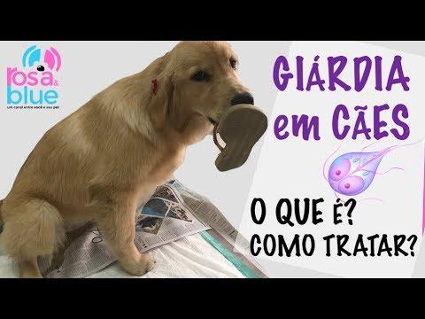 Giardia sintomas canina. Giardia helminták diagnosztizálása koncentrátum segítségével