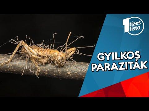 a szarvasmarha szalagféreg kórokozók morfofiziológiai tulajdonságai tabletták a paraziták számára a tüdőben