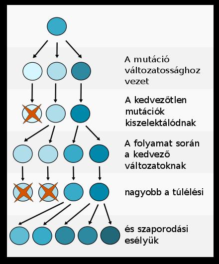 Parazita tisztító folyamat - Féreghajtó folyamat meghatározása