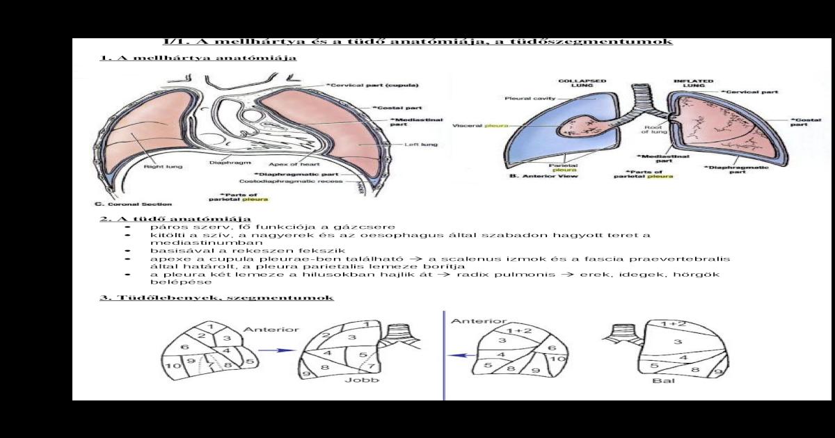 diphyllobothriasis diagnosztizálása és kezelése