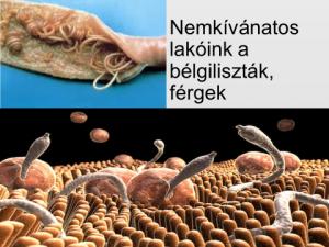 a bentonit agyag megsemmisíti a parazitákat gyógyszerek férgek dirofen