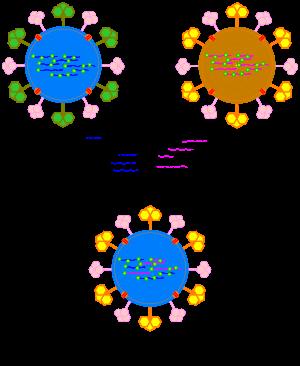 Echinococcosis: az emberek tünetei, a kezelés, a diagnózis
