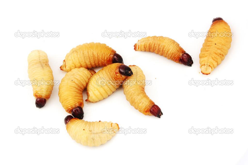 féreg larvak