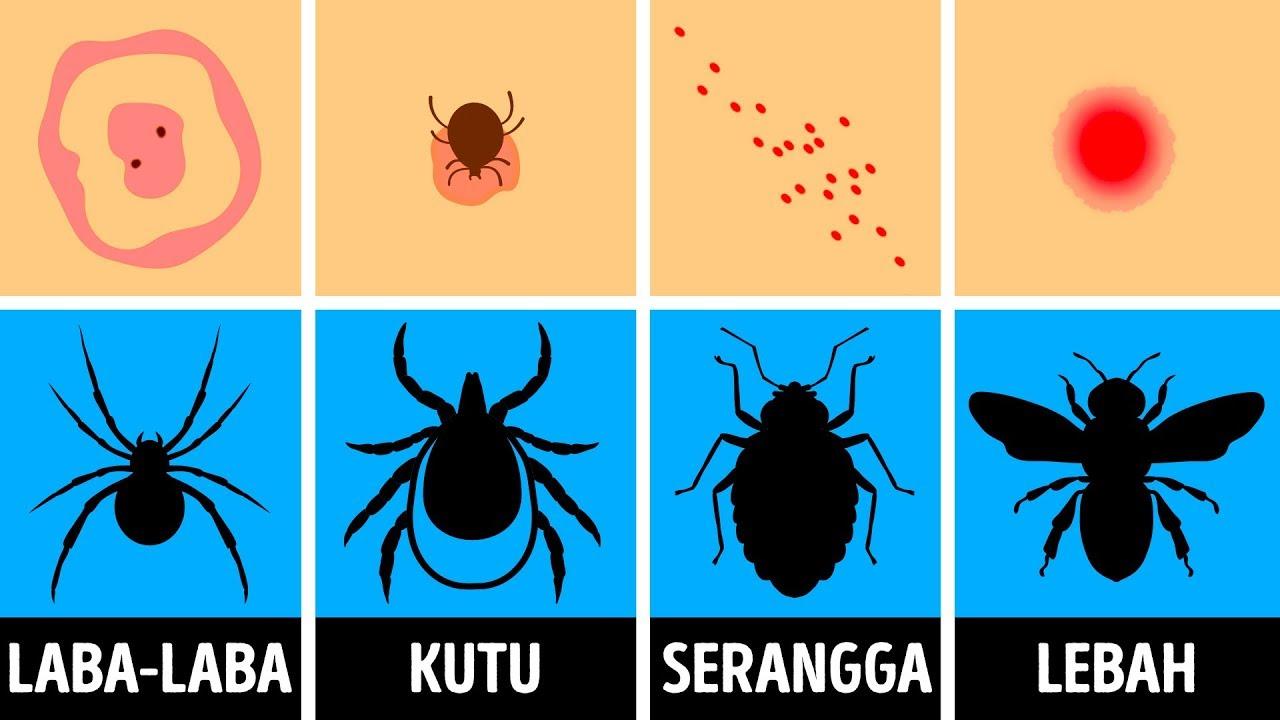 parazita fedővel ellátott bio kiegészítő