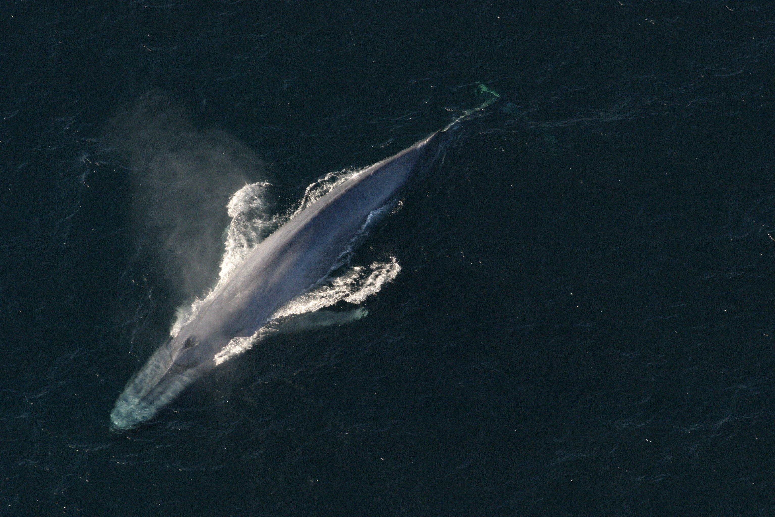 hogy a bálna nem szereti