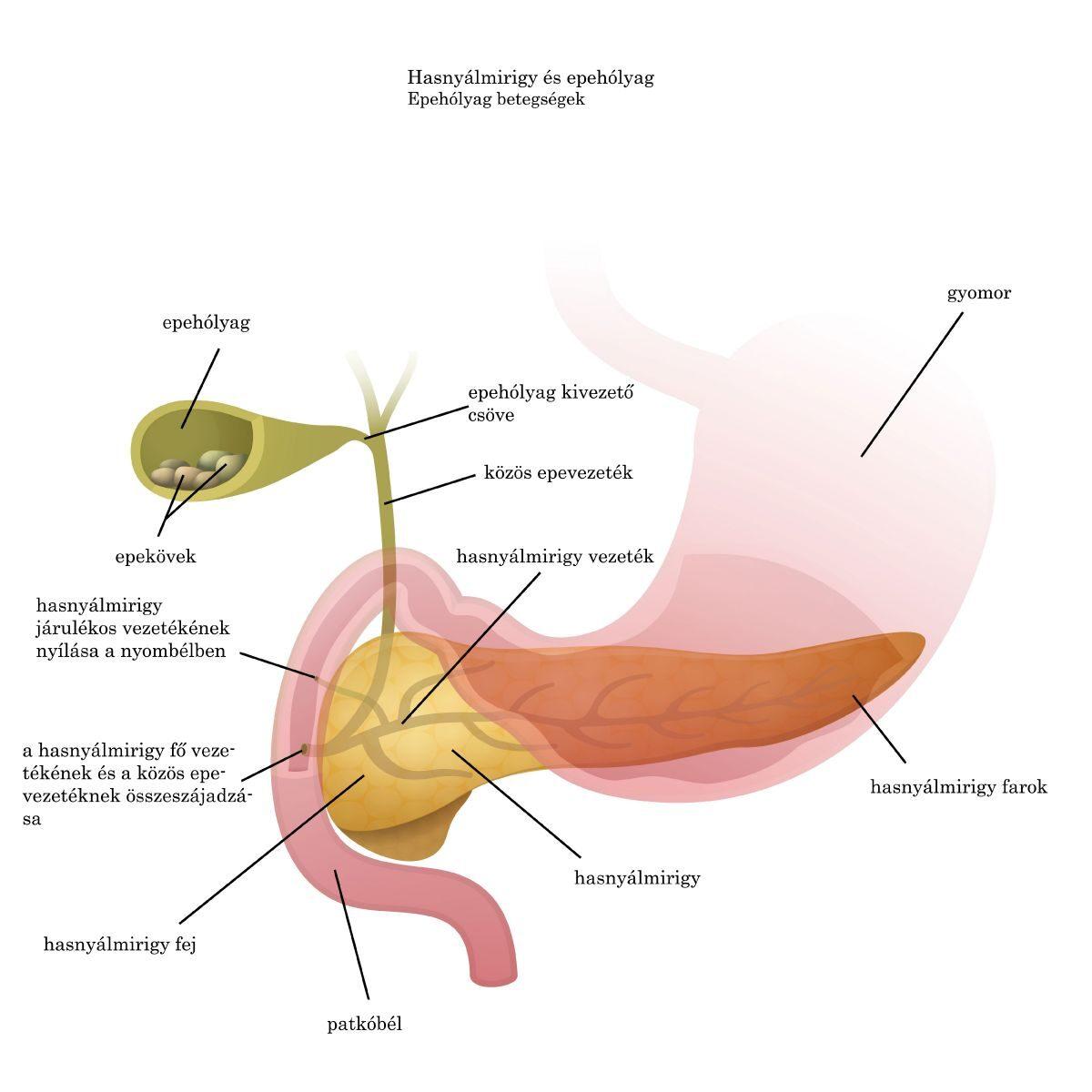 Paraziták utáni szövődmények. Az emberi test tüdejében élő paraziták