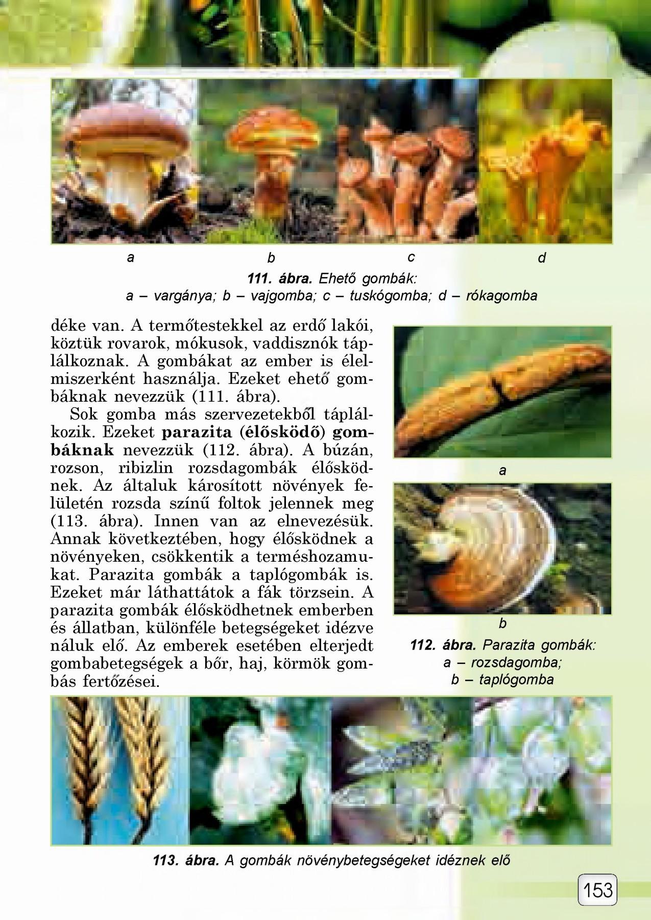 búza fű paraziták)
