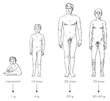 fájdalommentes húgycső tampon férfiakban