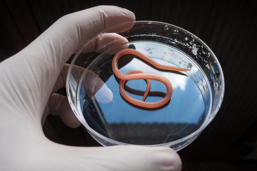 papillomavírus fertőzés bakterioforte összetétele