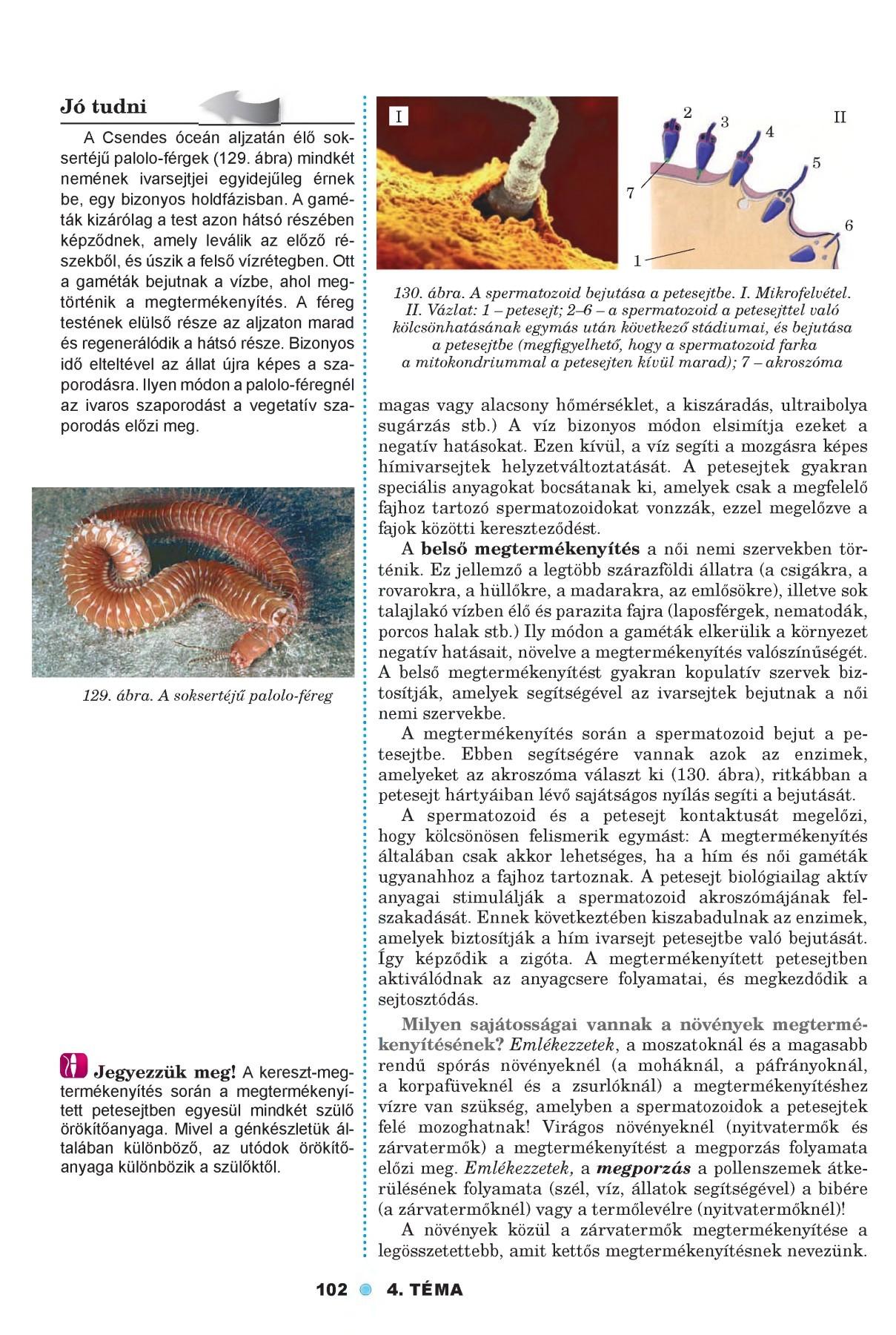 Parazita jobb kéz, Parazita elemzés chisinau