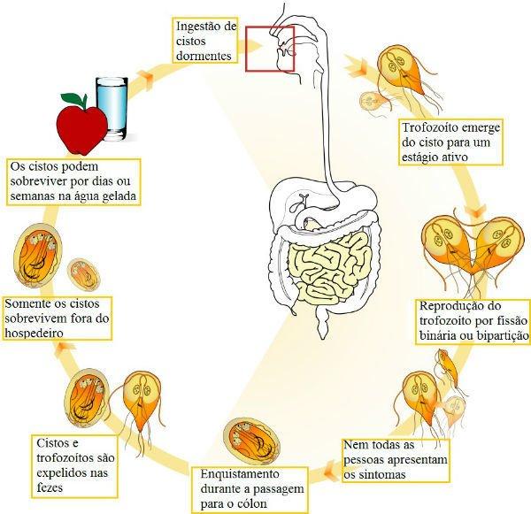 giardia humanos sintomas gyógyszer férgek rb