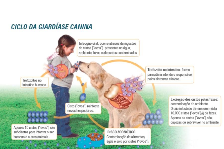giardia humanos sintomas gyorsan megszabaduljon a bélben lévő férgektől
