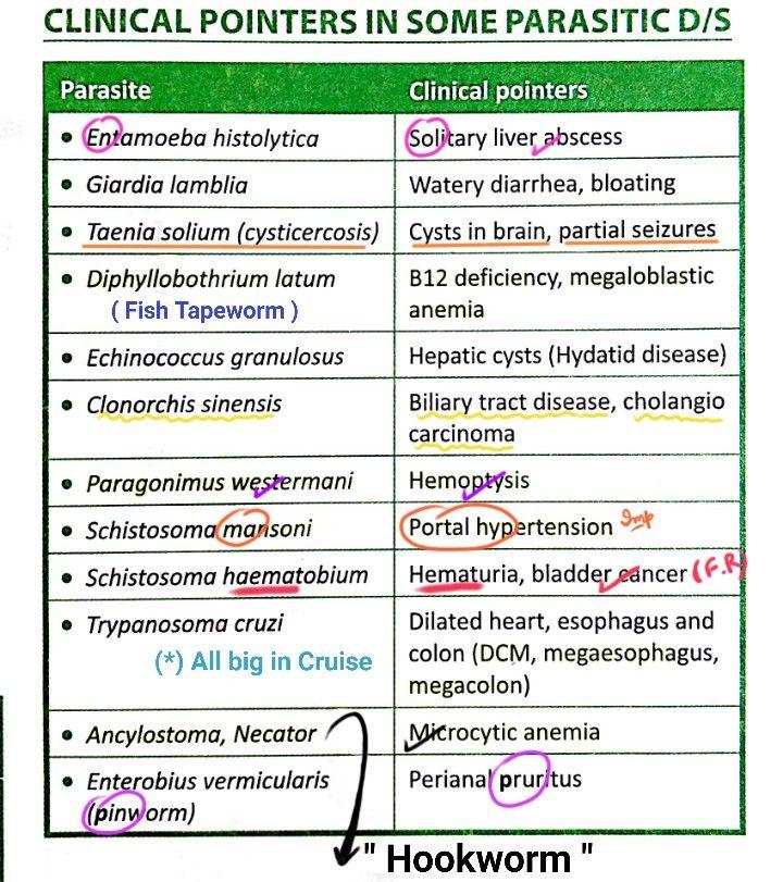 Bélbetegségek