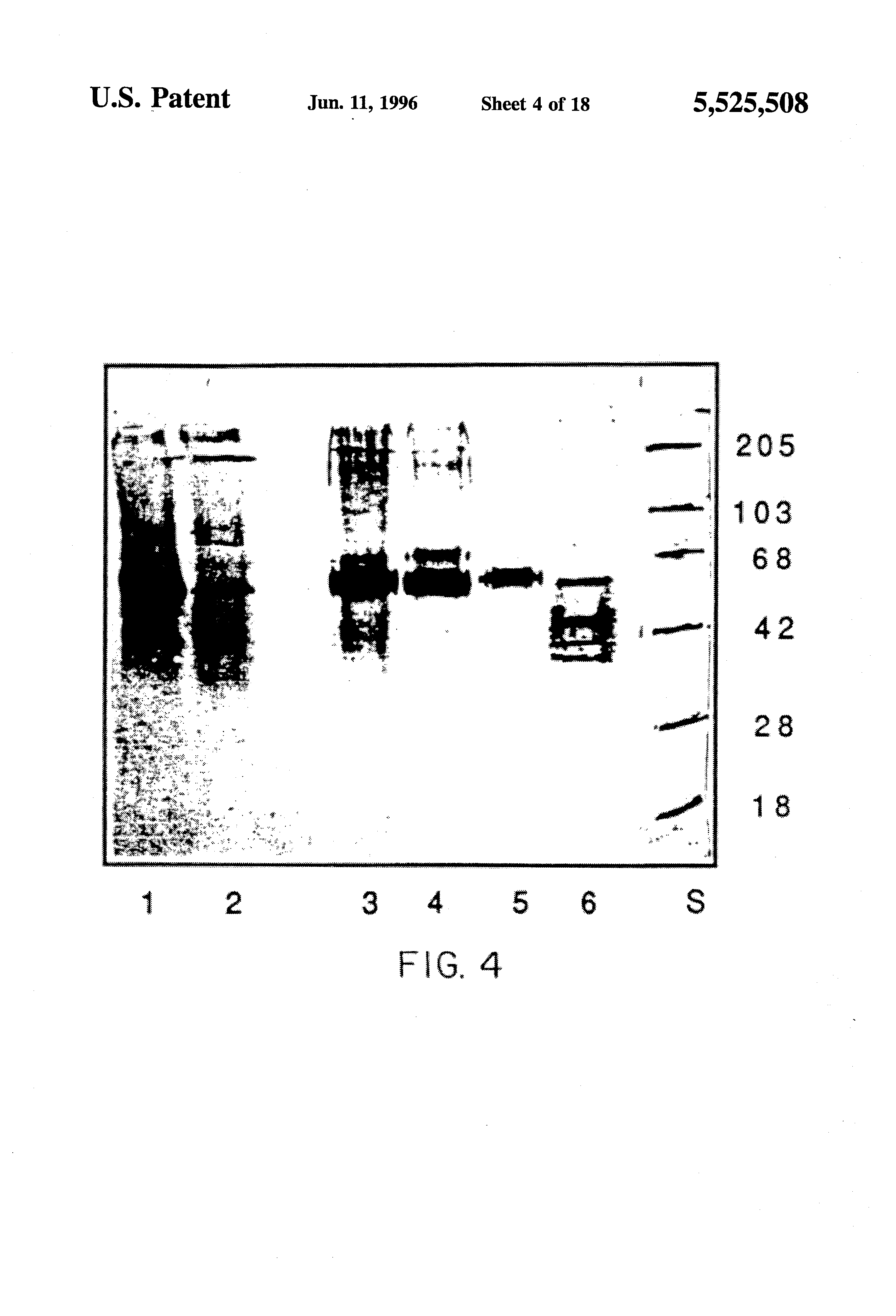 Helix enterobiosis, Kémcsőbe a bélszín tojások székletére