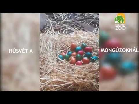 parazita ártalmatlanítási klinika gyógyszer az emberek férgek számára, pirantel ár