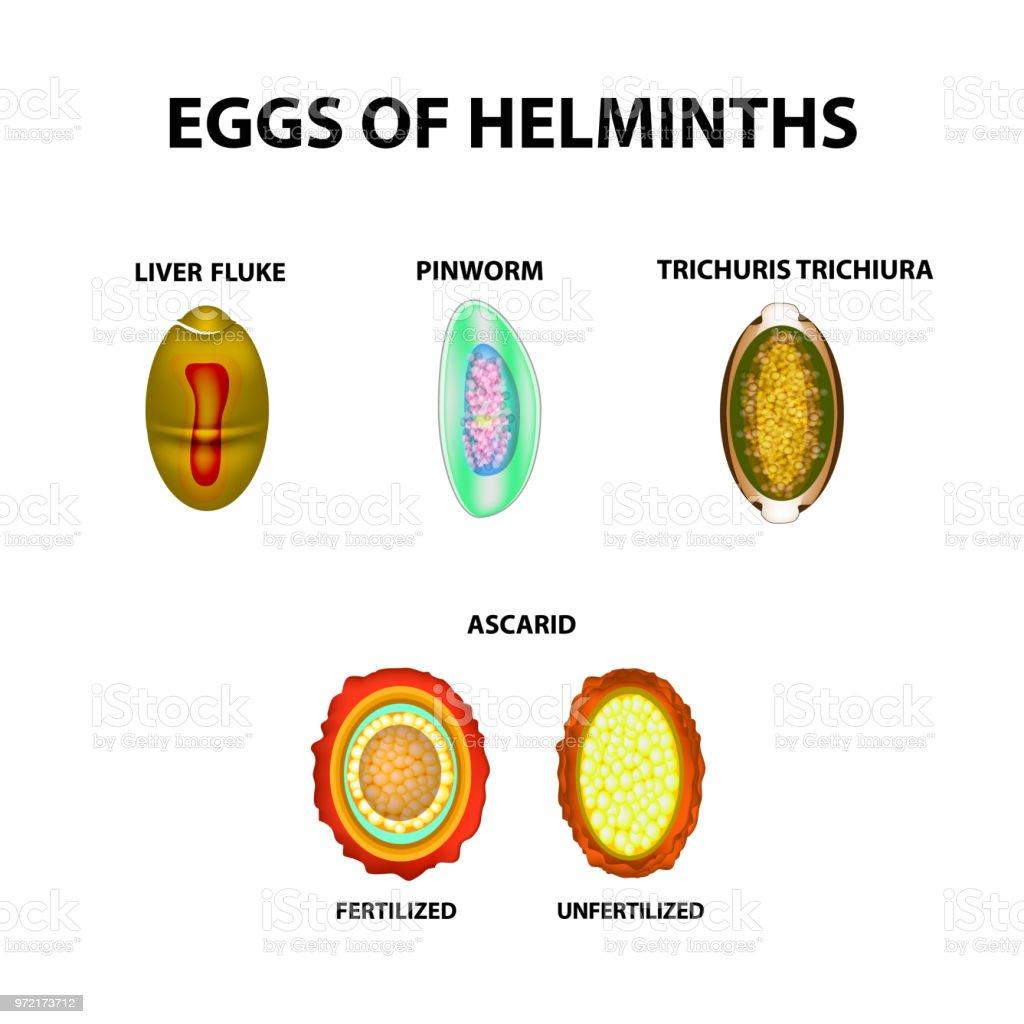 Helmint tabletta széles hatástartományú emberek számára