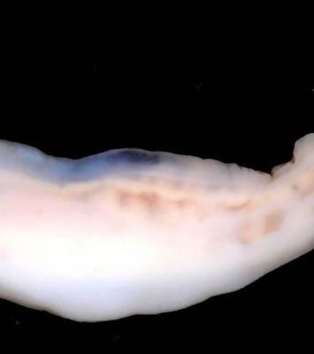 miért nem minden fonálféreg parazita