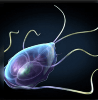 modern paraziták kezelési módszerei