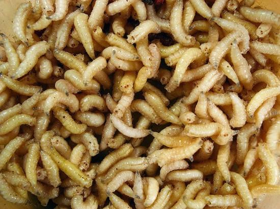 titokzatos ektoparazita morgellons betegség