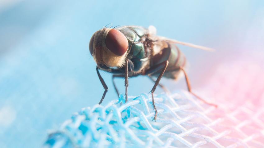 parazitacsípések kezelése szurke féreg