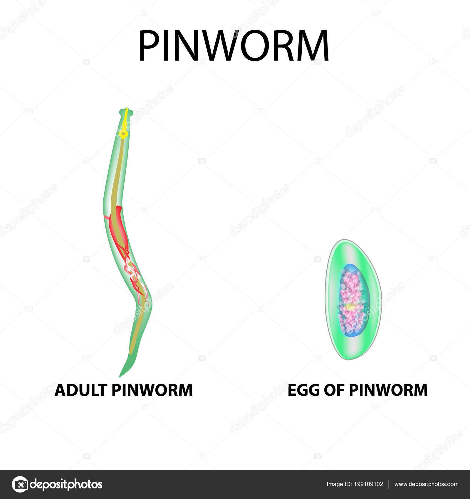 pinworm tojás teszt