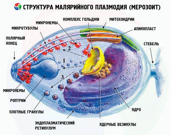 spánielnek rossz lehelete van féreg és paraziták gyógyszere az emberekről